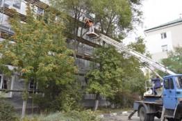 Спил и удаление деревьев. Корчевка пней публикация