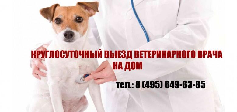 Изображение Круглосуточная ветеринарная клиника ВетКлиник-Мск